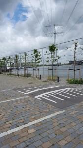 Aanplant bomen IJburglaan